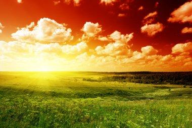 Summer landscape field of green grass and sunset