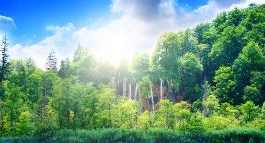 Sunlight in deep forest stock vector