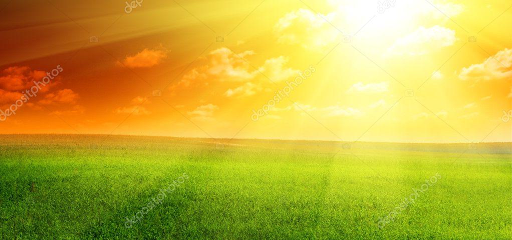 Field of summer green grass