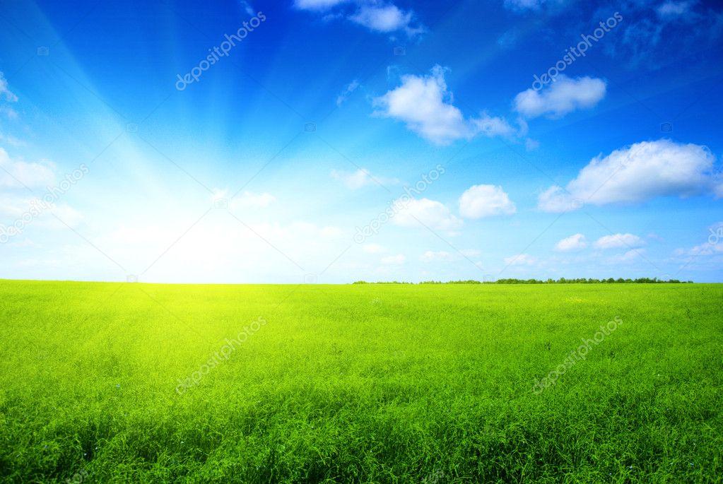 Summer grass and blue sky