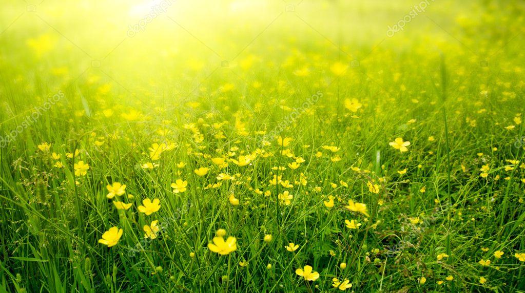 Фотообои Field of spring flowers