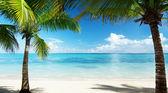 Fotografie palmy a moře