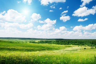 """Картина, постер, плакат, фотообои """"летний солнечный день и поле цветов """", артикул 4622199"""