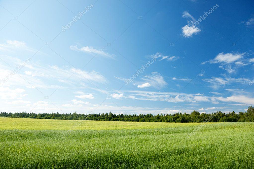 Фотообои Поле овса и солнечное небо