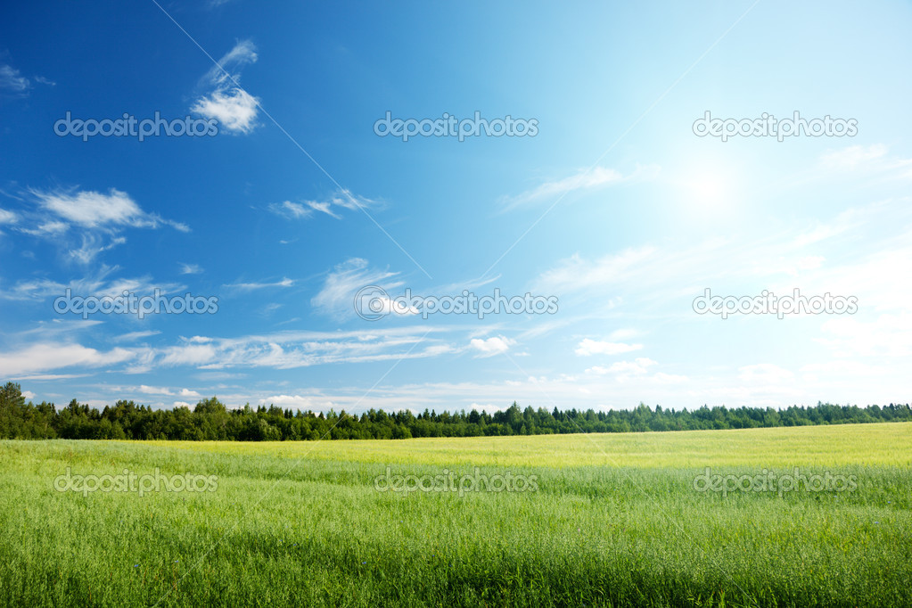 Фотообои Oat field and sunny sky