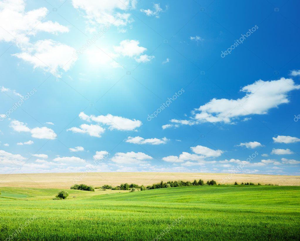 Фотообои Oat field and sunny sky