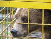 Photo Russian bear
