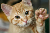 Kitten with his paw raised
