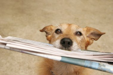 Dog with the daily news