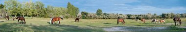 Panorama of a Paddock