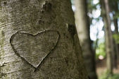 Fotografia amore scolpito su un albero