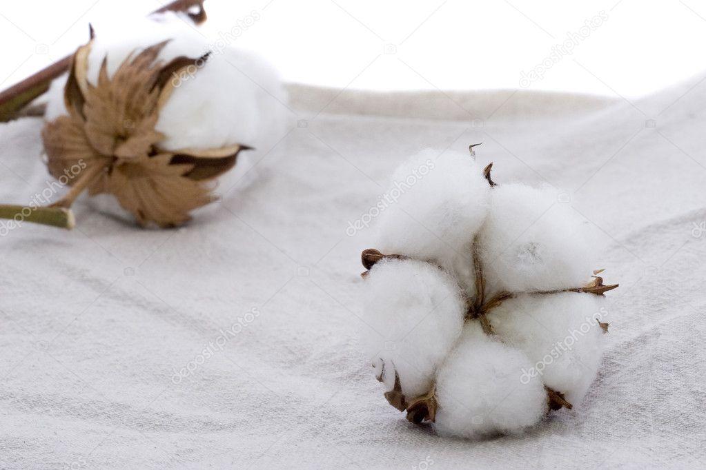 cotton culin plan ahead - HD1600×1066
