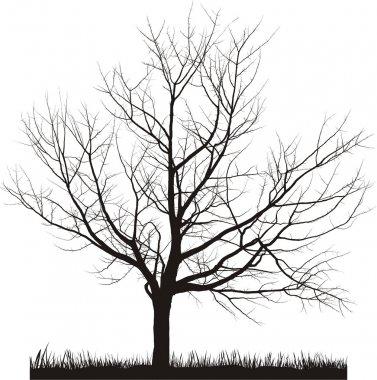 Vector illustration of cherry tree in winter