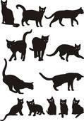Fotografia vettore di gatti