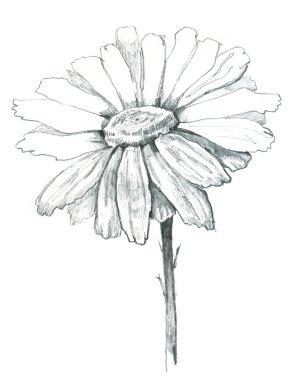 Daisy draw
