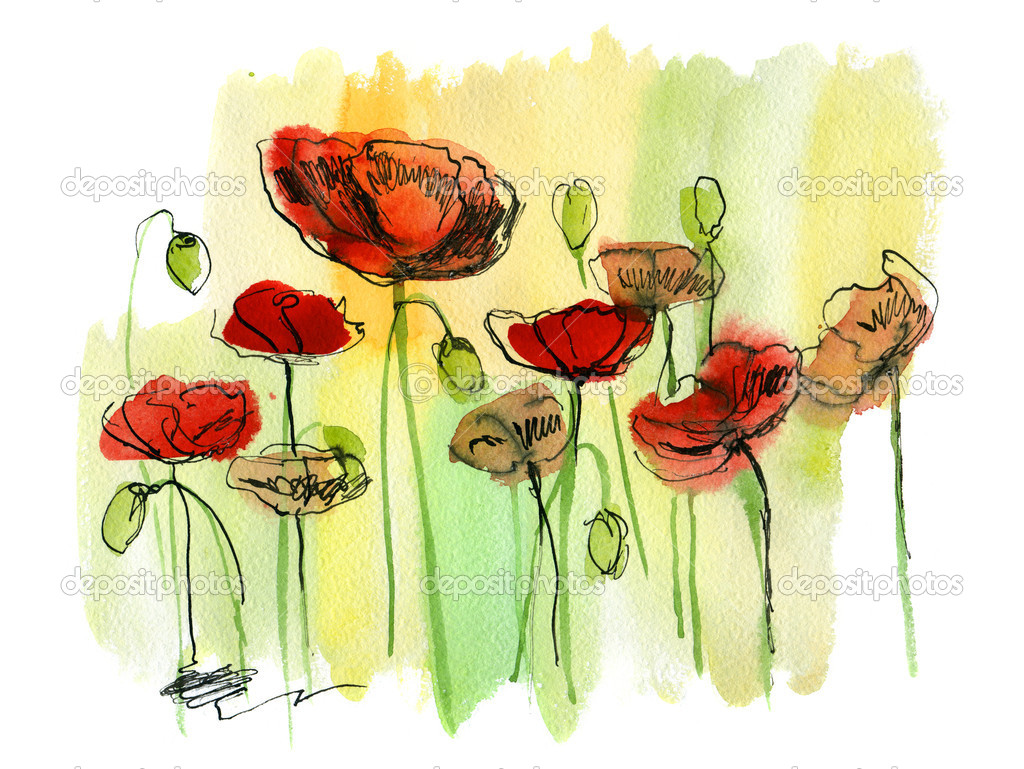 painted watercolor poppies u2014 stock photo bioraven 5376891