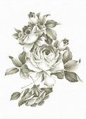 Fotografia rosa di disegno a mano libera