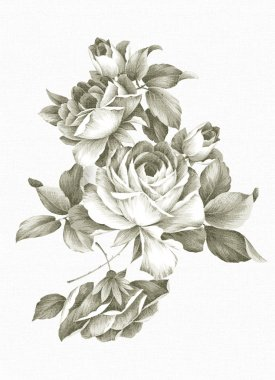 Freehand drawing rose
