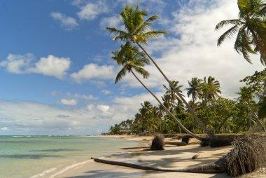 Wild caribbean beach