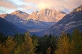 Rocky mountains podél borovice předat v Albertě
