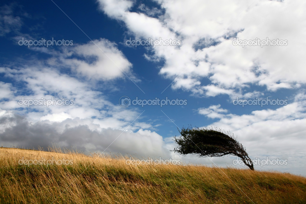 Landscape with bended tree