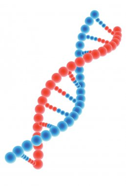 DNA model on white background