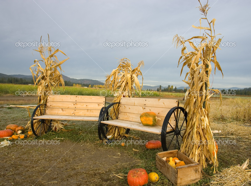 Corn stalks and benches.