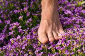 Zdravé nohy série: mužské nohy