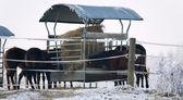 Photo Horses in winter