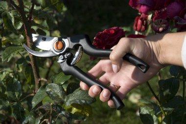 The gardens scissors