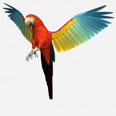 Cute macaw