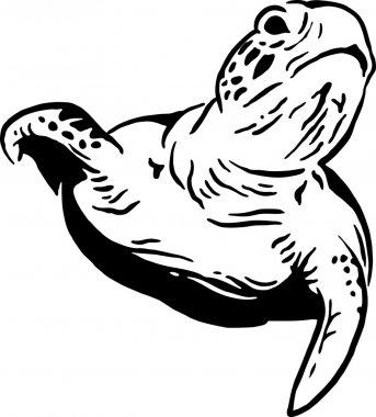 Water tortoise
