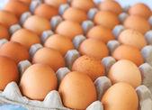 Fotografie zásobník na vejce