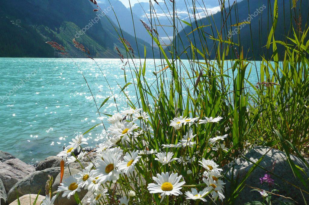 Nature Harmony