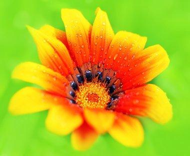 Fresh wet flower
