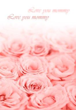 Fresh pink roses border