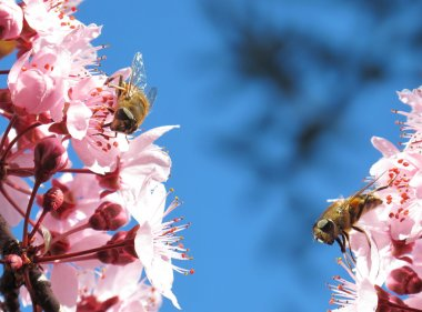 Two bees eating
