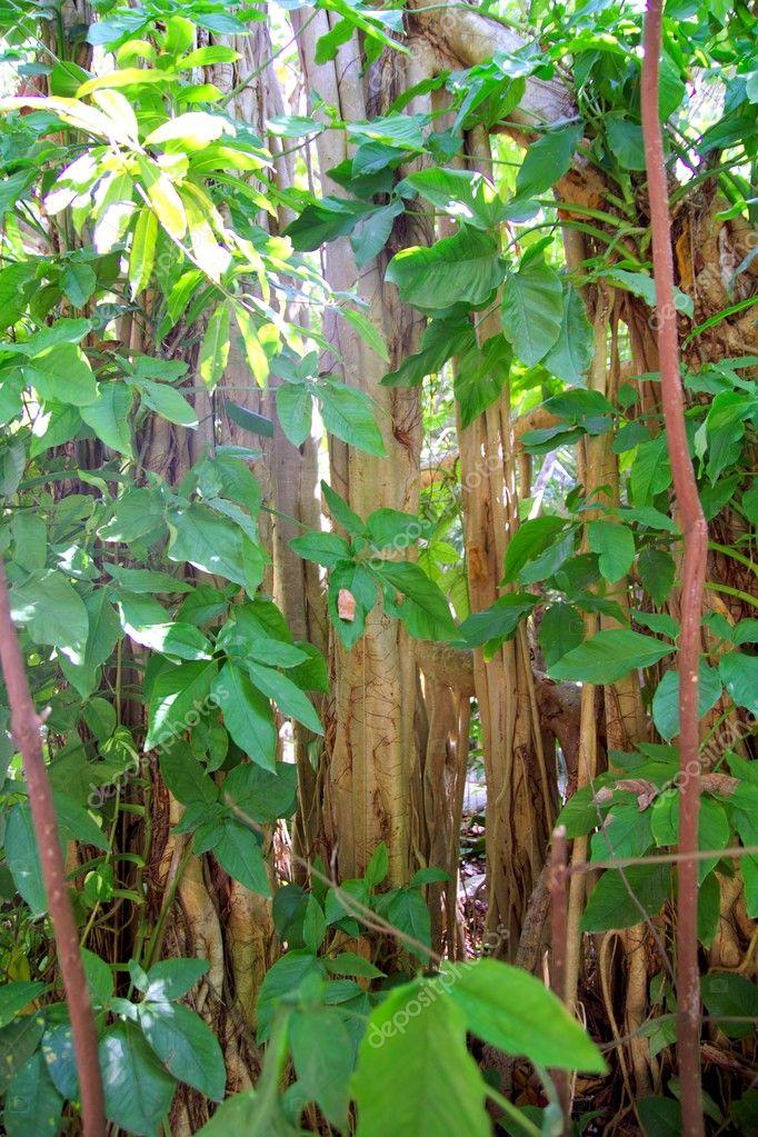 Rainforest jungle in central america