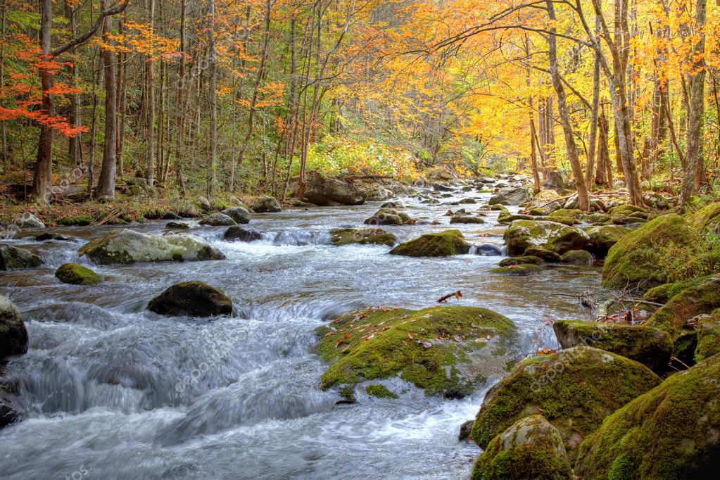 Smoky Mountain Stream in Autumn