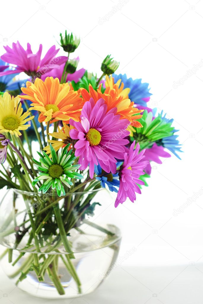 colorful daisies in a vase \u2014 stock photo © cheryledavis 5360597a bouquet of bright colored daisies in a vase, vertical with high key white background \u2014 photo by