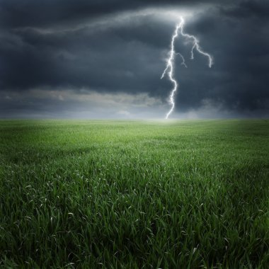 Storm and lightning on the green field