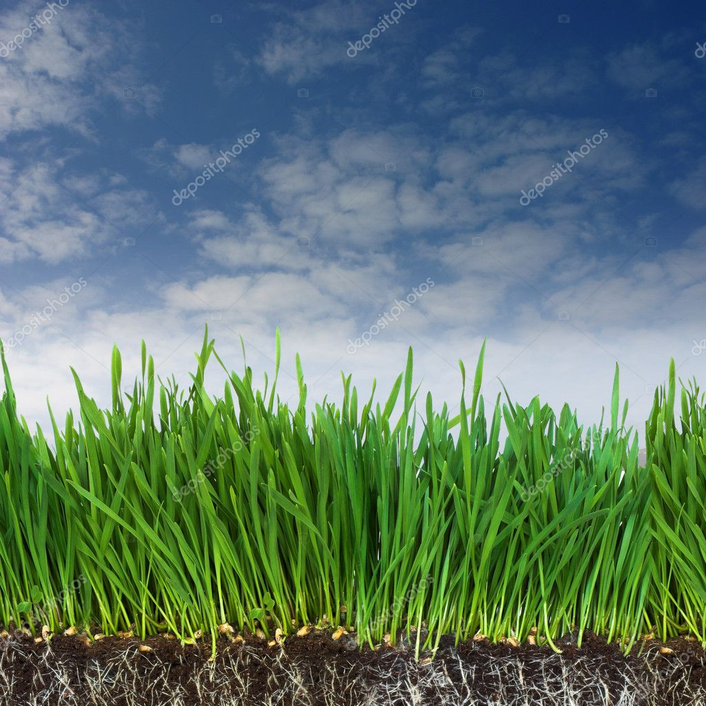 Green grass and dark soil with roots