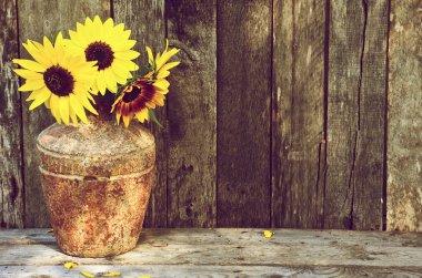 Sunflower still life.