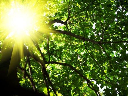 Photo pour Crone d'arbre avec le soleil - image libre de droit