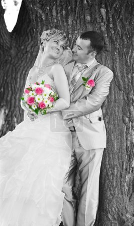 Wedding couple on the background of a tree trunk