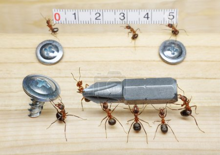 Team of ants measures with ruler and carries screwdriver to screw, teamwork