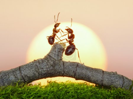 Photo pour Deux fourmis au coucher ou au lever du soleil - image libre de droit