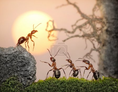 Team of ants, council, collective decision