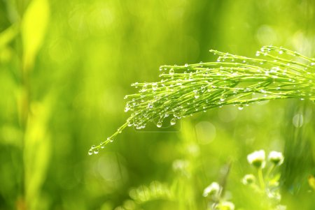 Photo for Dew drop on a blade of grass - Royalty Free Image