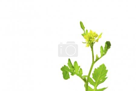 Photo pour Jeune plante verte sur fond blanc - image libre de droit